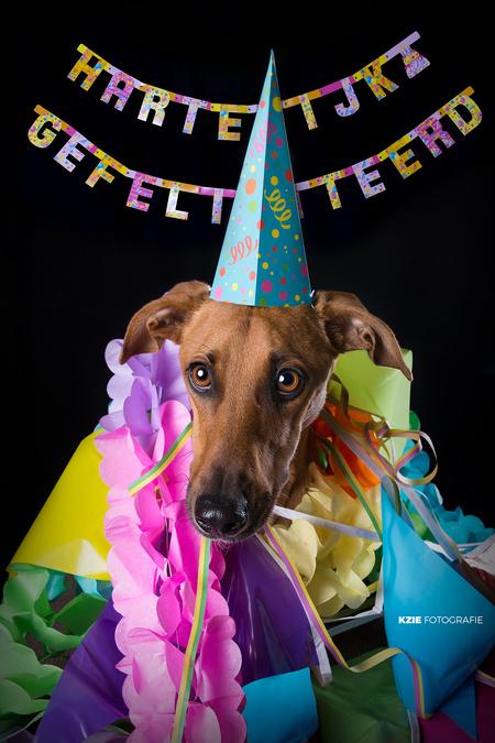 Hieperdepiep! - Mijn eigen supermodelletje Sprokkel wordt vandaag 3 jaar! - foto door VivianJolie op 07-10-2016 - deze foto bevat: portret, huisdier, hond, verjaardag