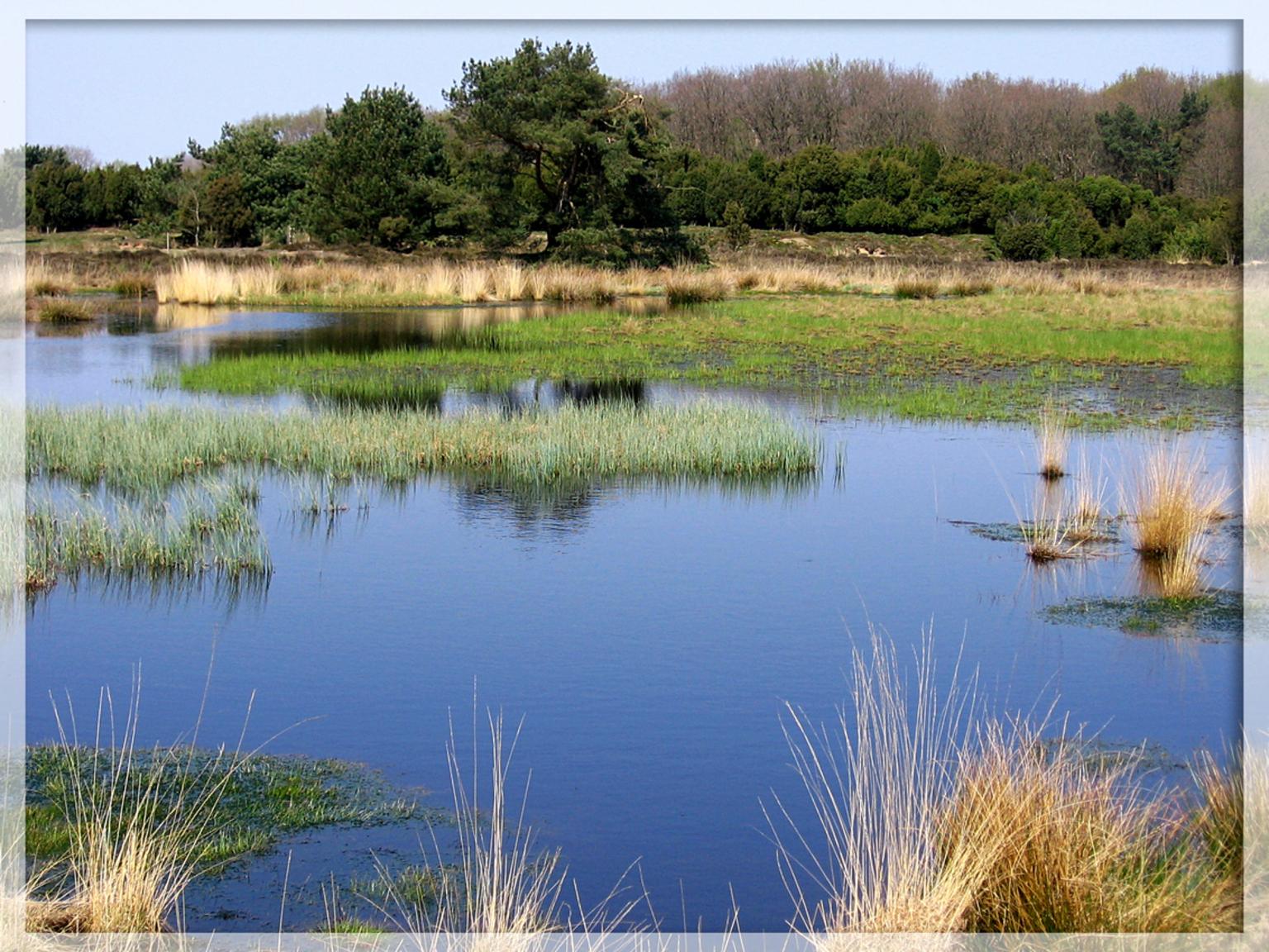 The view - - - foto door daniel44 op 04-02-2006 - deze foto bevat: water, natuur, hei, ven, view, daniel44