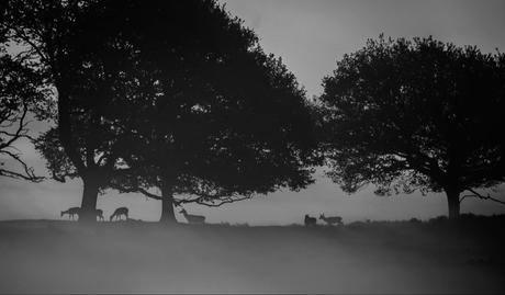 Damherten in de mist