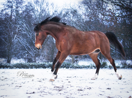 Tyson in de sneeuw 2
