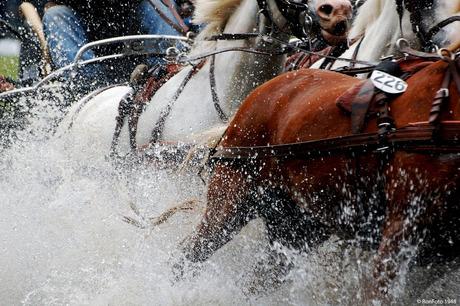 Paardenspektakel Beekbergen 30-07-2011 031 - kopiekopie.jpg