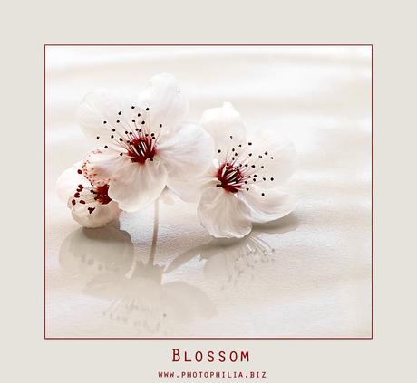 Blossom..