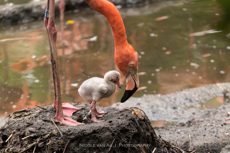 Moederliefde.