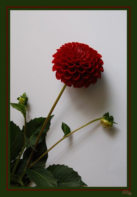 Test met bloemen 2