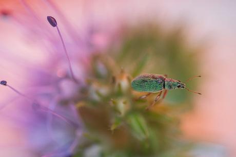 Kleine groene snuiter