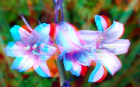 Bloemen 3D macro