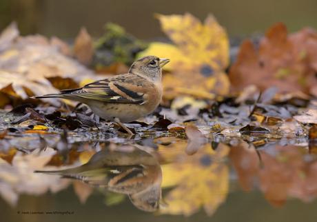Keep tussen de herfstbladeren