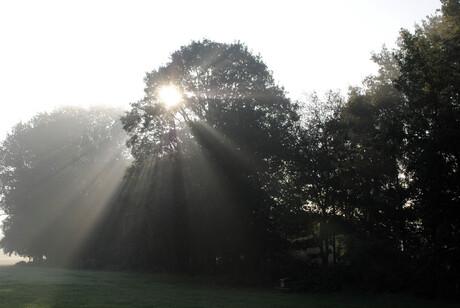 ochtendlicht