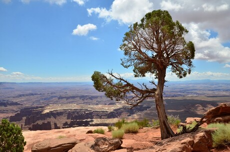 Canyonlands. Isle in the sky