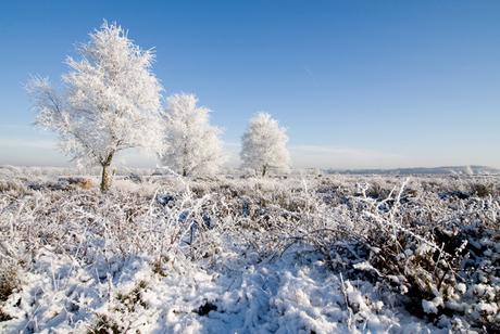 Winter op de Ginkelse Heide