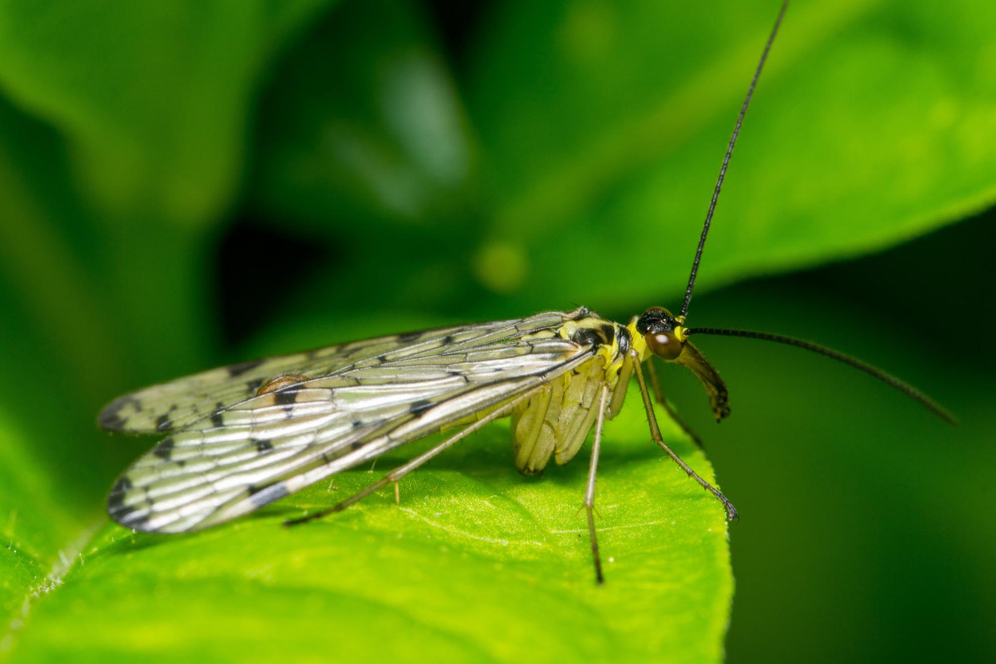 Vlieg met lange neus - Vlieg met lange neus die probeert warm te worden in de ochtend - foto door martin-60 op 30-04-2017 - deze foto bevat: groen, macro, lente, natuur, vlieg, bruin, tuin, insect, bokeh - Deze foto mag gebruikt worden in een Zoom.nl publicatie