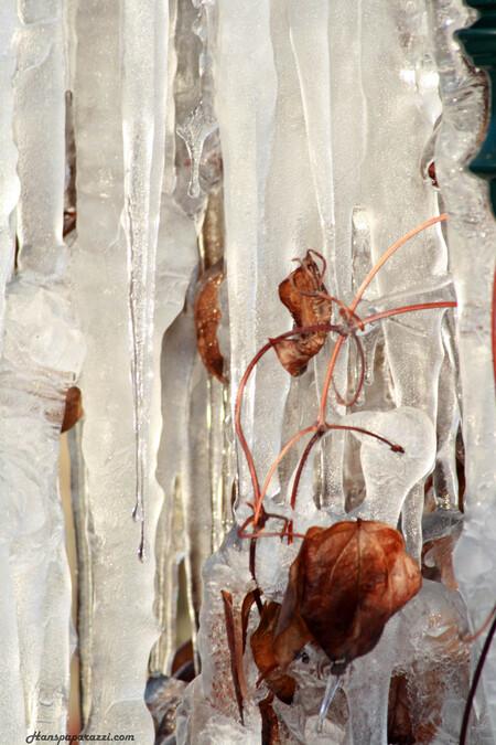 IJspegels - Ijspegels in alphen aan den rijn - foto door hanspaparazzi op 25-12-2010 - deze foto bevat: ijs, canon, hans, ijspegels, hanspaparazzi, canon d400