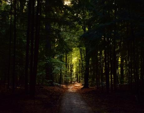 Tunnel van bomen