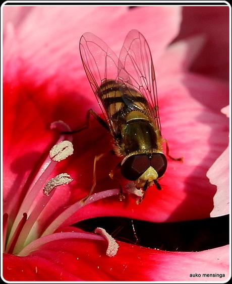 vlieg + bloem