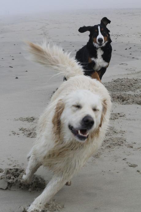 ontmoeting op het strand van De Haan