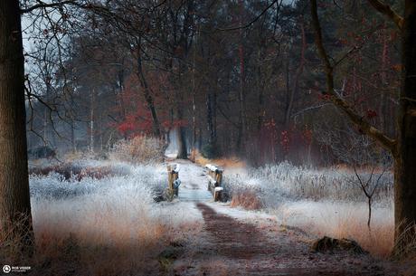 Frosty crossing II