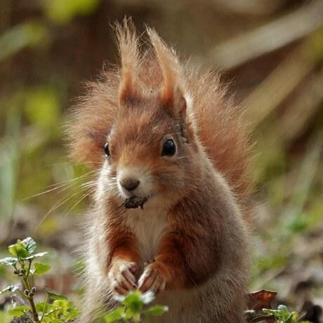 Te lief dit eekhoorntje