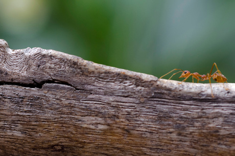 Loop niet zo te mieren