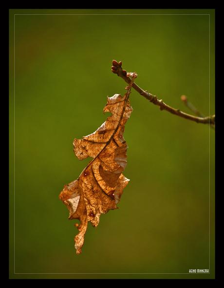 ¨ eminent leaf ¨