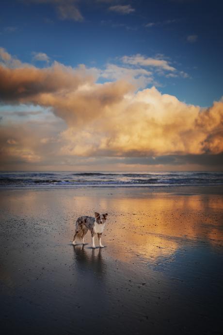Faya op het strand
