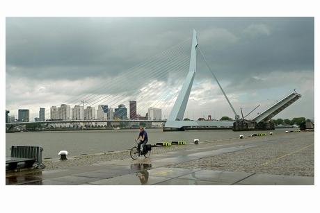 Fietser in Rotterdam