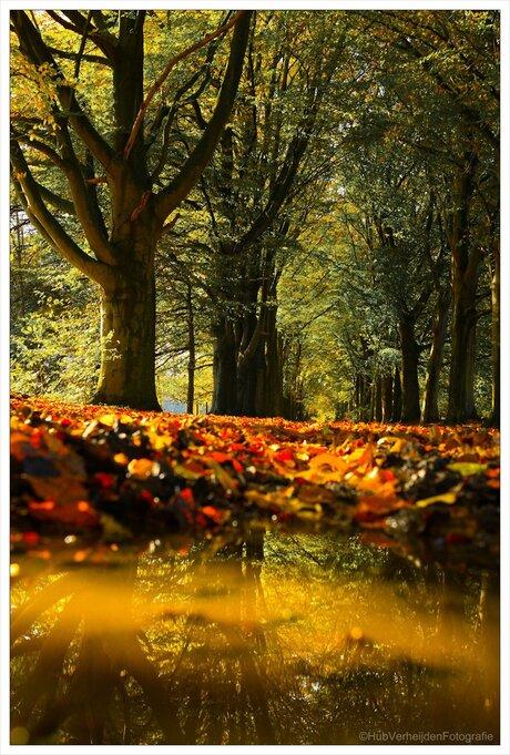 herfst-weerspiegeling.