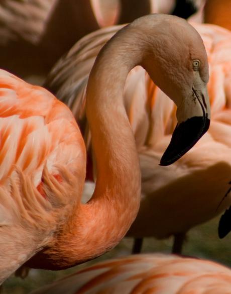 flamingo bewerkt