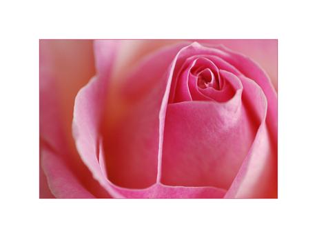 op een rose wolk...