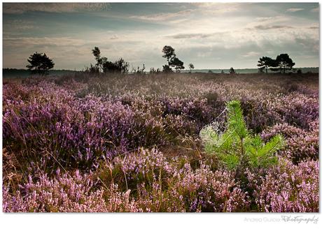 Heathland sunrise