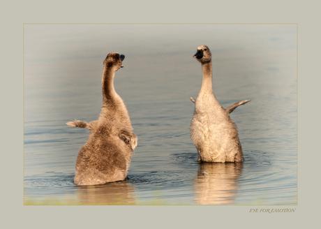 We dansen de samba..