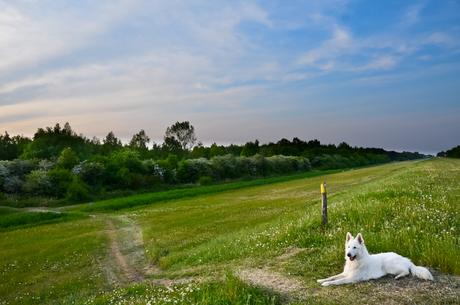 Hond op dijk