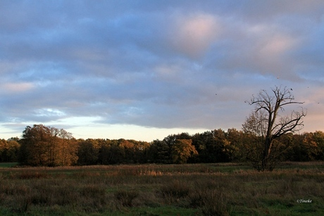 Stroomdallandschap Drentse AA (2)