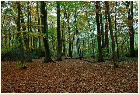 herfst in het bos