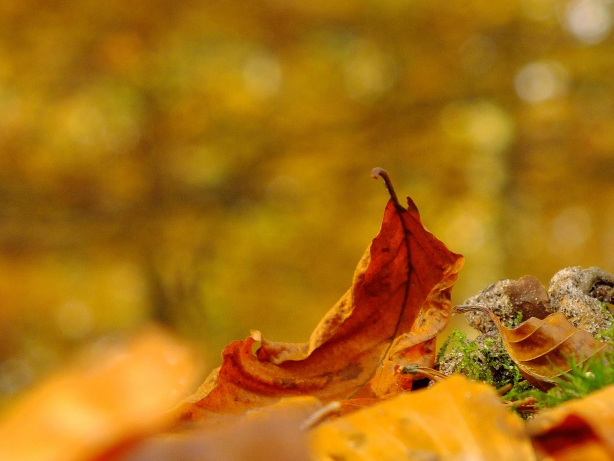 Gevallen. - - - foto door fujializah op 23-11-2015 - deze foto bevat: macro, herfst, blad, bokeh - Deze foto mag gebruikt worden in een Zoom.nl publicatie