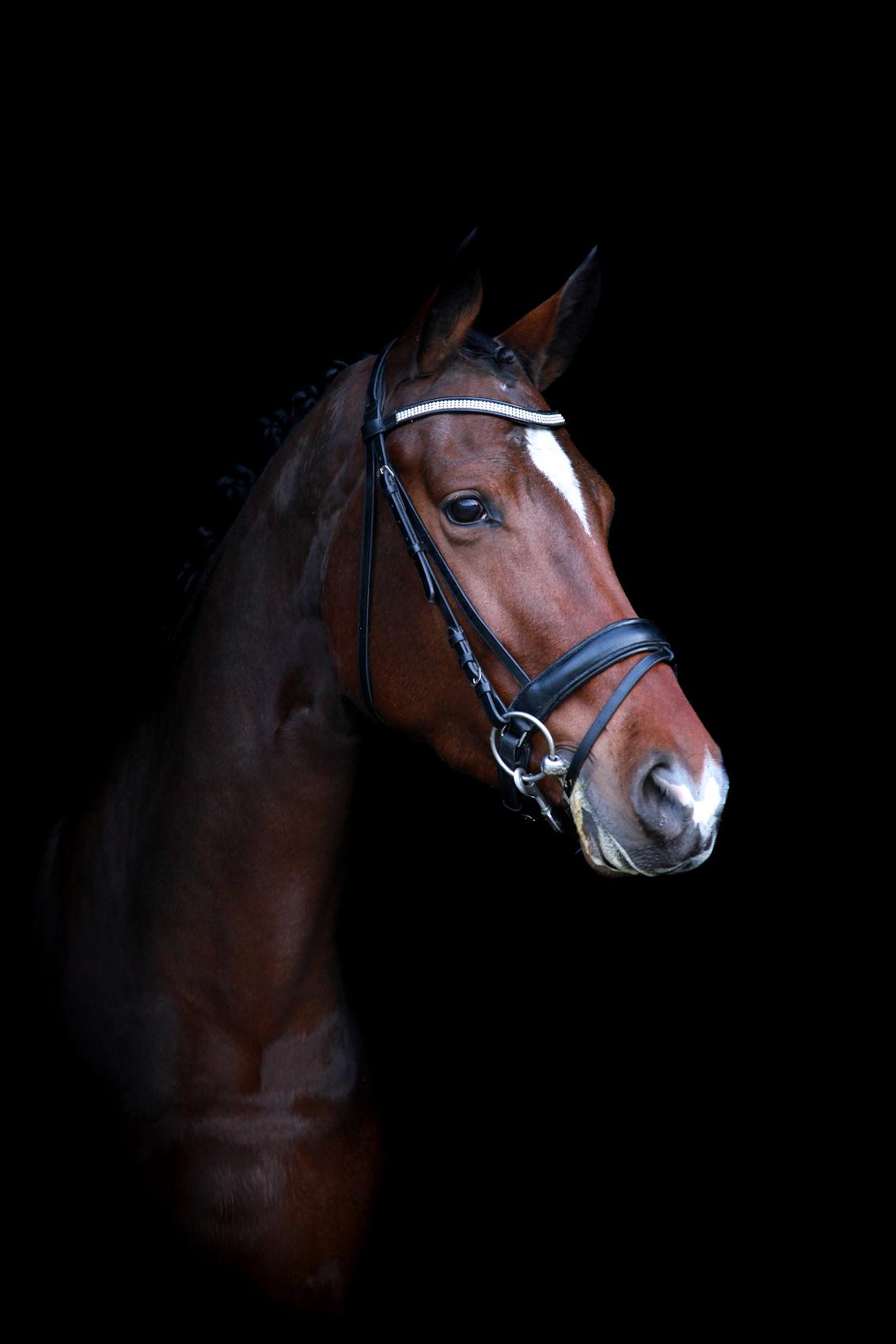 Yes gelukt - Al heel lang wilde ik een foto maken van een paarden hoofd met een zwarte achtergrond je ziet ze wel eens staan in die mooie paarden bladen maar ik w - foto door cibjen op 24-11-2013