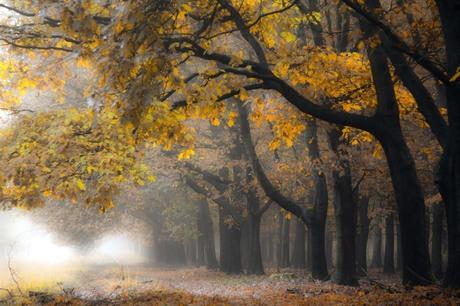 Een mistig herfstplaatje