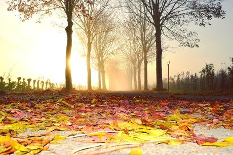 Tapijt van bladeren
