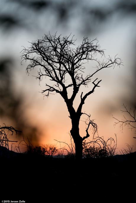 Zonsondergang in het Kruger park (Zuid-Afrika)