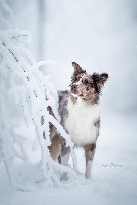 Faya in de sneeuw