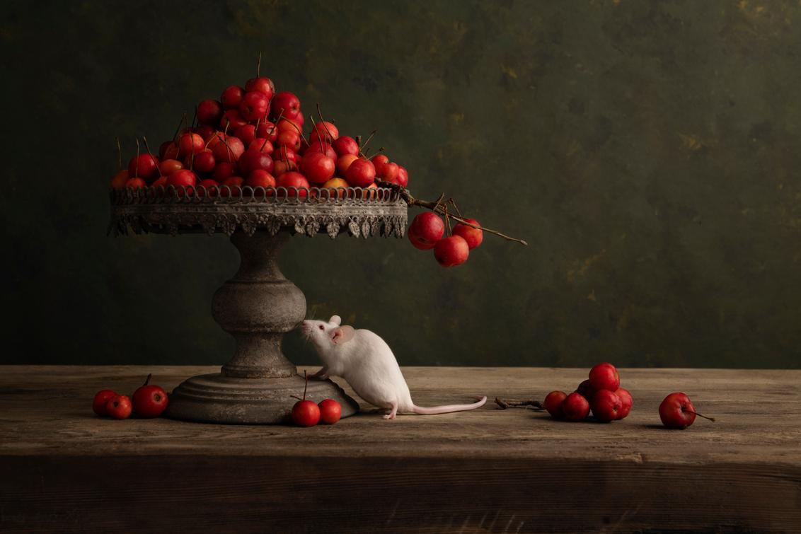 muis met appels - Muis met rode appels - foto door Carolovesmacro op 02-03-2021 - deze foto bevat: appel, dieren, huisdier, stilleven, muis, fine-art, witte muis