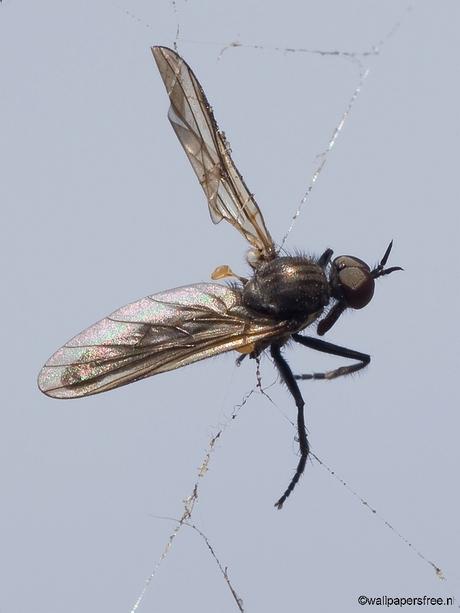 In het spinnenweb