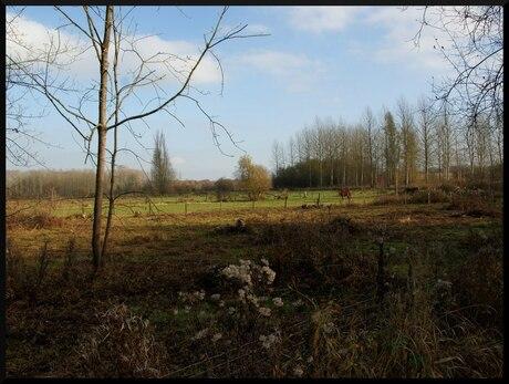 De Kevie (Belgie)