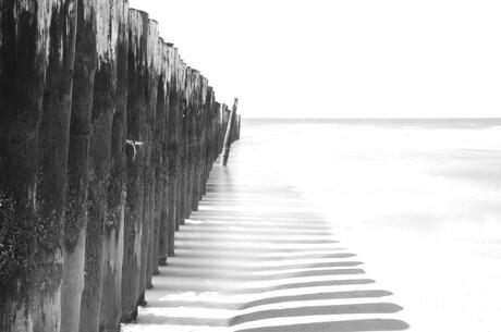 zeepalen zeeland
