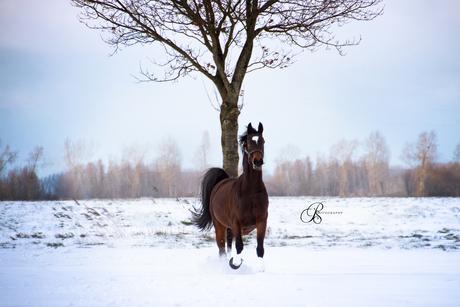 Enjoying Wintertime