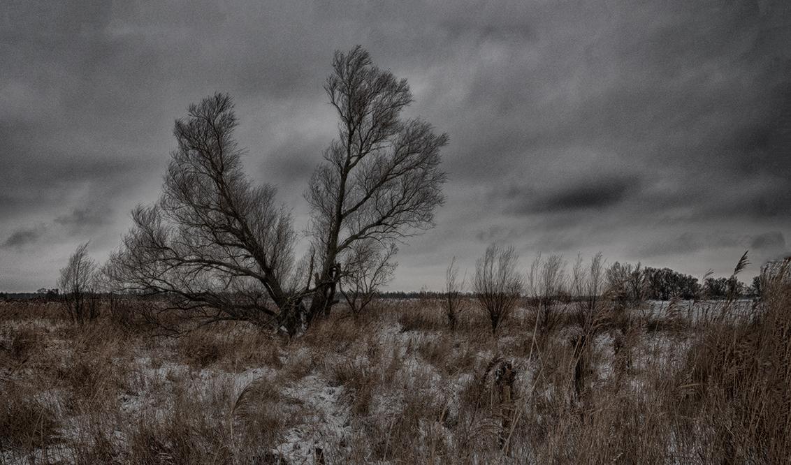 Samen één (boom) - De wegen van de stammen gaan uitéén, maar toch is dit één boom. Buitendijks bij het Zuidplaatje op de Dordtse oever van de Nieuwe Merwede, in de Holl - foto door PeterKosterHT op 07-02-2021 - deze foto bevat: lucht, wolken, boom, panorama, natuur, licht, sneeuw, winter, ijs, landschap, bomen, rivier, wilgen, dordrecht, biesbosch, hdr, wilg, merwede, nieuwe merwede