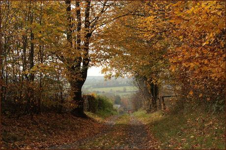 herfst doorkijkje