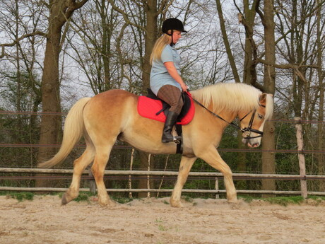 paard en ruiter shoot