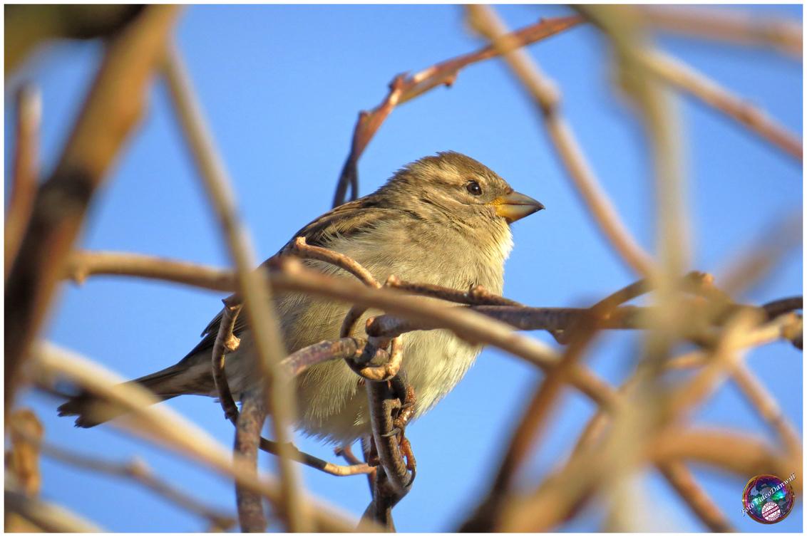 Musje in het zonnetje ... - - - foto door willemdanker op 08-01-2019 - deze foto bevat: mus, zonnetje, vogel, musje, zeewolde