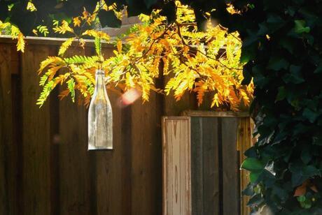 Fall Flash Sunshine_ArtEK Photograpy
