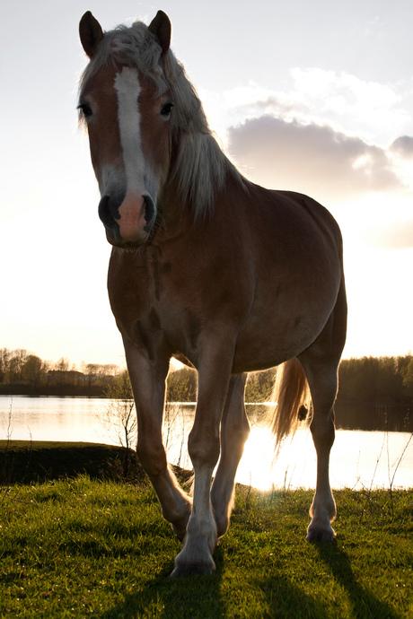 Paard in Loo